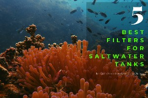 Reef Stable - Saltwater Fish Tank Blog - 5 Best Filters for Saltwater Tanks