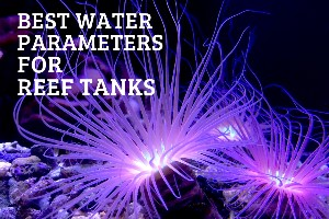 Reef Stable - Saltwater Fish Tank Blog - Best Water Parameters for Reef Tanks