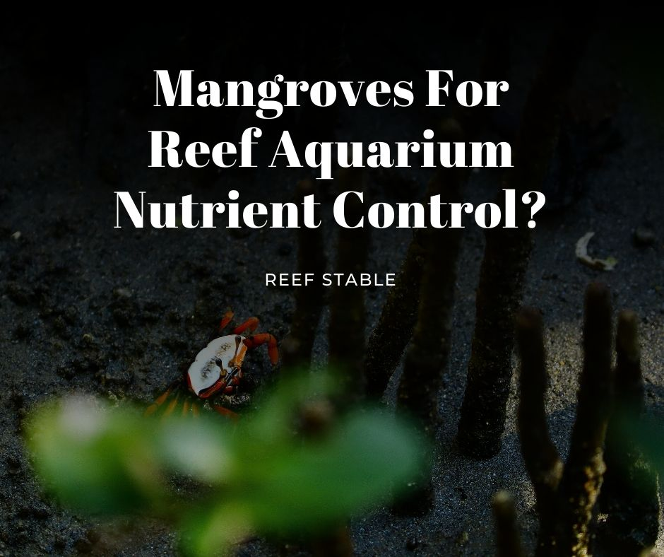 Reef Stable - Saltwater Fish Tank Blog - Mangroves for Aquarium Nutrient Control