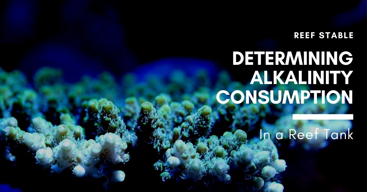 Reef Stable - Saltwater Fish Tank Blog - Alkalinity in a Reef Tank - Determining Alkalinity Consumption