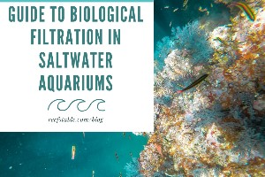 Reef Stable - Saltwater Fish Tank Blog - Guide to Biological Filtration in Saltwater Aquariums