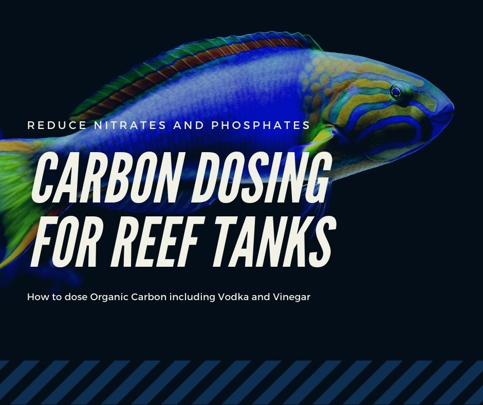 Reef Stable - Saltwater Fish Tank Blog - Carbon Dosing Reef Tank