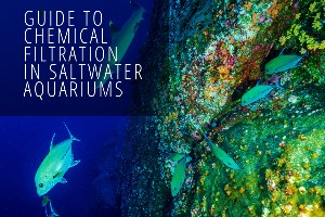 Reef Stable - Saltwater Fish Tank Blog - Guide to Chemical Filtration in Saltwater Aquariums
