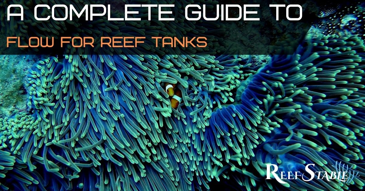 Reef Stable - Saltwater Fish Tank Blog - Guide to Flow for Reef Aquariums
