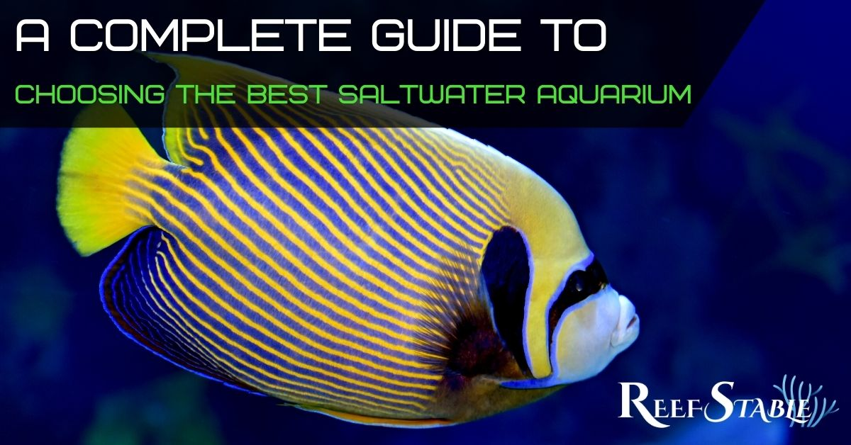 Reef Stable - Saltwater Fish Tank Blog - How to set up a saltwater fish tank - What tank Should I get?