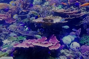 Reef Stable - Saltwater Fish Tank Blog - 6 Essential, and 5 Non-Essential Equipment Needed for Setting Up a Saltwater Aquarium
