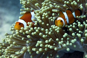 Reef Stable - Saltwater Fish Tank Blog - How to Switch 2-Part Brands in 3 Easy Steps