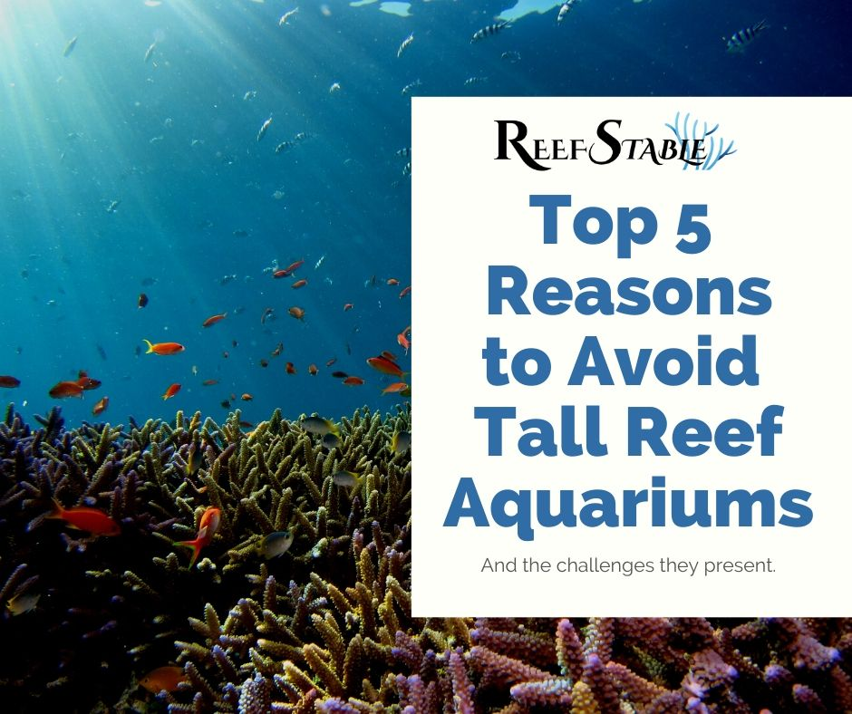 Reef Stable - Saltwater Fish Tank Blog - Top 5 Reasons to Avoid Tall Reef Aquariums